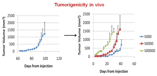 tumorigenicity in vivo 650
